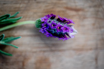 purple flowers on wood background