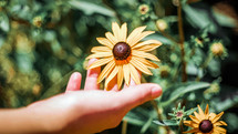 hand touching a yellow flower