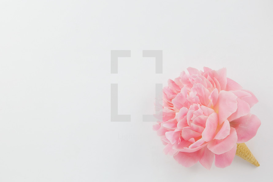 pink spring flower in an ice cream cone on a white background