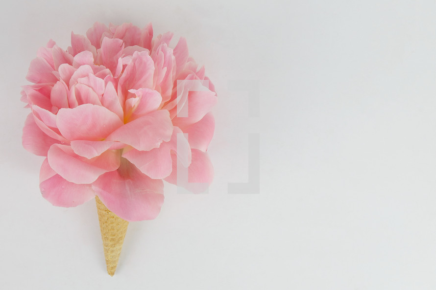 pink spring flower in an ice cream