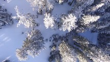 aerial view above snow in a forest