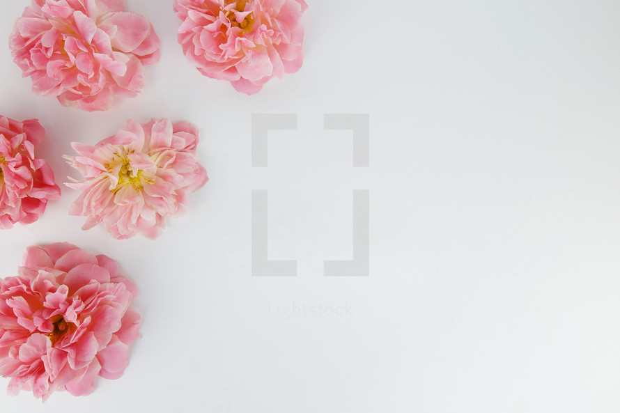 pink flowers in the corners on a white background