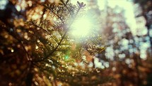 Sunlight on tree branches in a forest | New Day | Day Light | Sun Rise | Light | New Beginning | Movement | Creation | Glory | Cinematic | Bokeh | Landscape | Camp