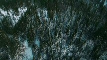 aerial view over a winter pine forest