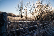 Ice-covered Fence that is sunlit in a Winter Scene