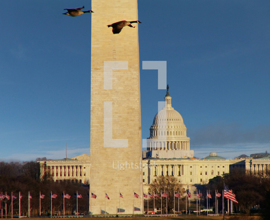 geese flying in front of the Washington monument
