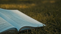 Bible lying in the grass