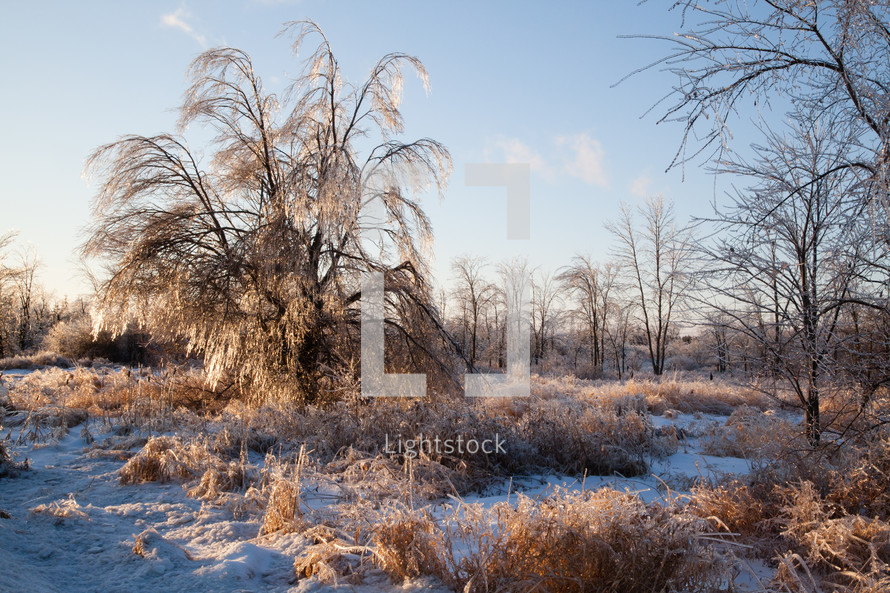 Ice-Covered Forest of Trees after Winter Storm are Sunlit