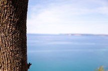 tree trunk and calm blue water