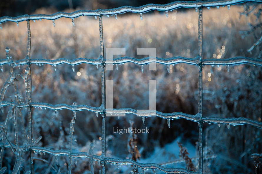 Ice-covered Fence in Winter Scene