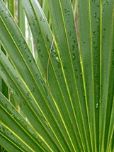 Wet palm fronds