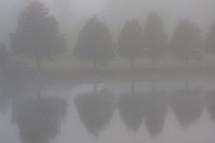 trees along a lake shore in fog