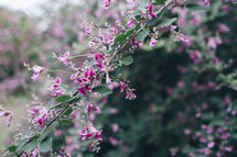 A bush branch with pink blooms.