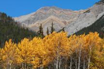Autumn trees and mountains