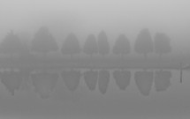 A line of trees being reflected in a pond on a foggy day.