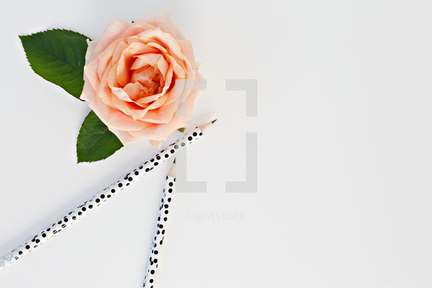 pencils and peach rose on a white desk