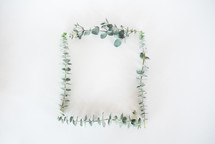 frame of eucalyptus
