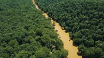 Dense Forest With River 04