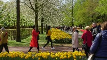 tourists visiting a tulip garden in Amsterdam