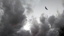 A soaring eagle soars above gathering storm clouds effortlessly showing no fear of the coming storm.