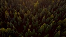 Drone shot over forest at sunset.