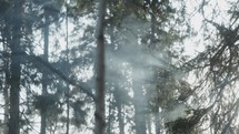 smoke in a forest
