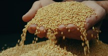 cupped hands holding mustard seeds