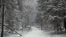 a path in a forest in the falling snow