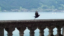 Switzerland Bird Flies Away