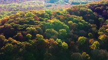 aerial view over an autumn forest
