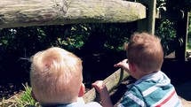 Boys Watching Peacock at Zoo