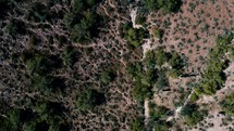 desert landscape and trail in Scottsdale, AZ
