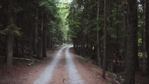 dirt road through a forest