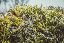 frost on a spider web