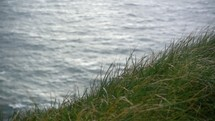 grasses blowing in the breeze along a shore along the cliffs of Moher