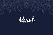 advent fir border
