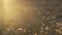 sunlight on mulch