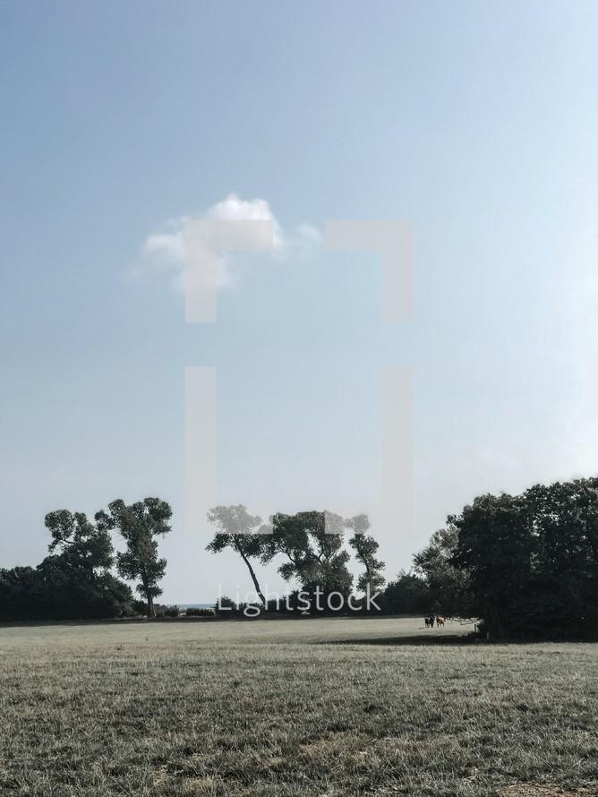 grassy farmland