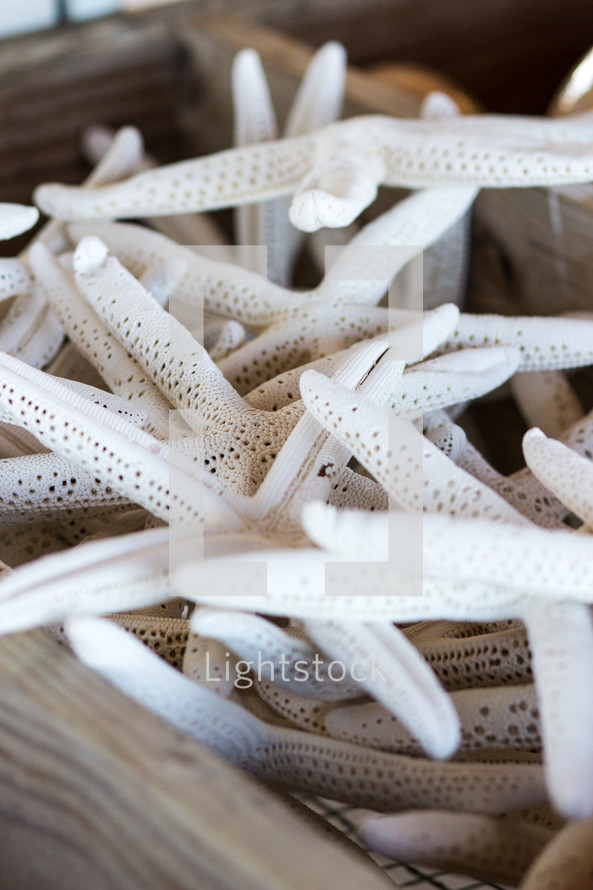 sea stars in a wooden box
