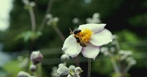 bees pollinating a flower