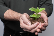 cupped hands with soil and a plant