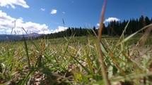 grasslands in Colorado