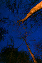 stars in a night sky over bare trees