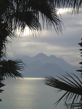 island view through palms