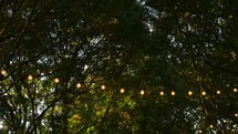 glowing strings of light hanging in trees outdoors in a backyard