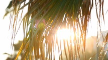 Sun Behind Palm Leaves