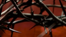 thorns on a crown of thorns