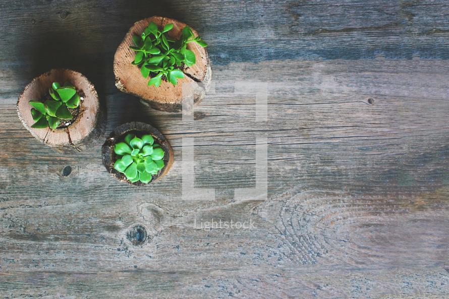 house plants in logs