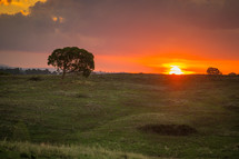 Sunset on the horizon of a pasture with trees.
