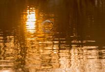 ripples on lake water